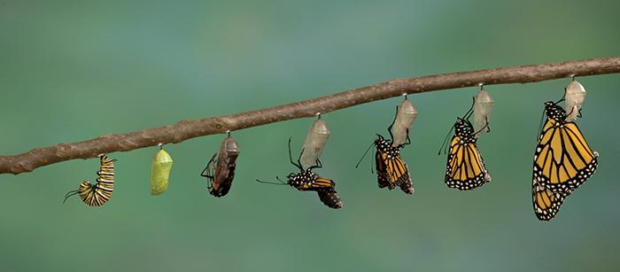 O que a lagarta tem a nos ensinar sobremudança?